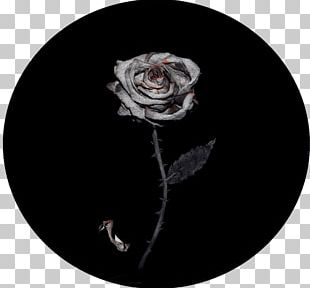 Rose Family Flower PNG