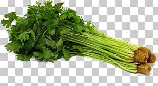 Parsley Celery Vegetable Seed Hydroponics PNG