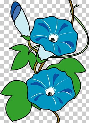 Floral Design Japanese Morning Glory Flower Summer PNG