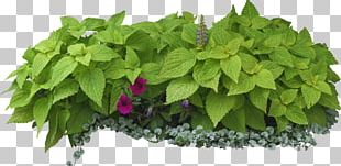 Shrub Tree Garden On Landscape Architecture Herbs & Flowers: Plant PNG