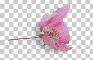 Rose Family Pink M RTV Pink PNG
