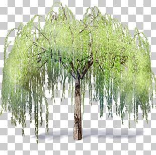 Weeping Willow Tree .dwg Autodesk Revit Building Information Modeling PNG