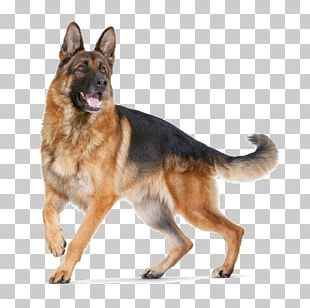 German Shepherd Puppy Cat Dobermann Dog Breed PNG