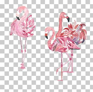 Bird Flamingos Amazon.com Crane PNG