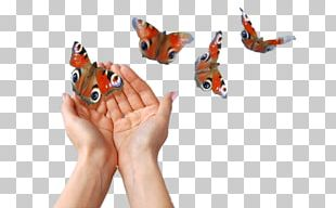 Butterfly Money Stock Photography PNG
