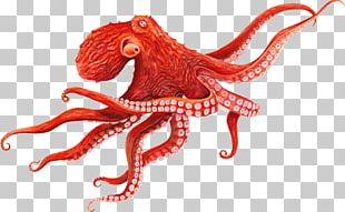 Giant Pacific Octopus Cephalopod Squid PNG