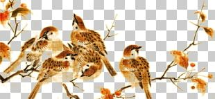 Song Dynasty Bird-and-flower Painting Gongbi Realism PNG