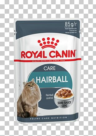 Cat Food Dog Kitten Hairball PNG