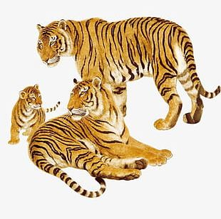 Hand-painted Tiger Animals PNG