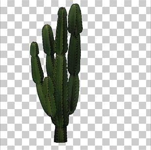 Cactaceae San Pedro Cactus Icon PNG