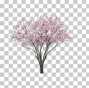 East Asian Cherry Portable Network Graphics Tree Blossom PNG