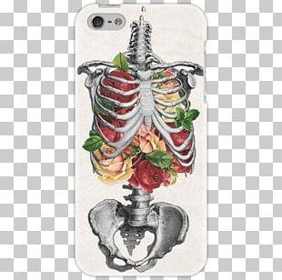 Human Skeleton Art Rib Flower PNG