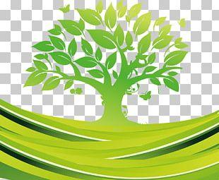 Exp Services Tree Euclidean PNG