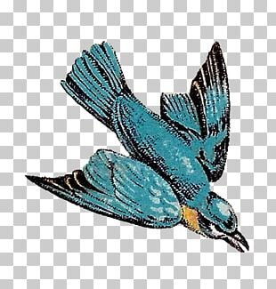 Bird Feather Drawing Flight PNG