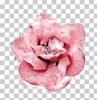 Beach Rose Flower Petal Garden Roses Pink PNG
