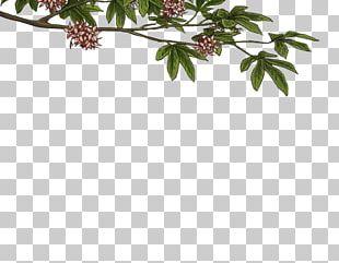 Twig Plant Stem Leaf Flowering Plant PNG