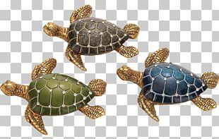 Loggerhead Sea Turtle Reptile Turtle Shell PNG