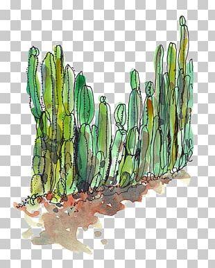 Cactaceae Desert Succulent Plant Cactus Fence PNG