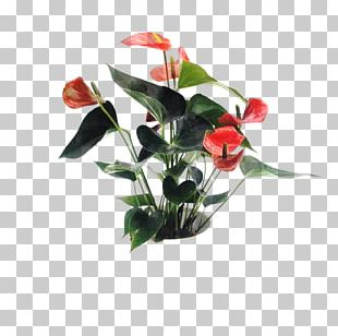 Floral Design Cut Flowers Artificial Flower PNG
