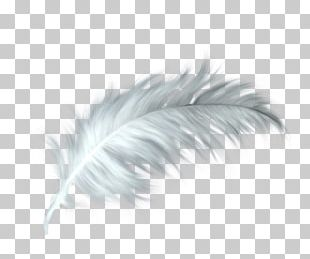 White Feather Healing Quill Paris PNG