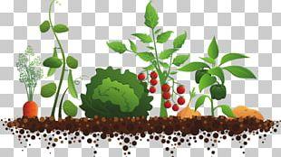 Community Gardening Garden Club Kitchen Garden PNG