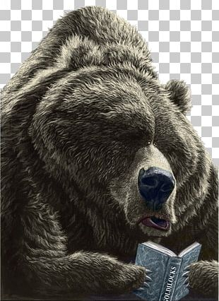 Brown Bear PNG