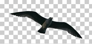 Bird Flight Flock PNG