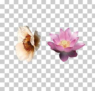 Flower Lilium Petal Pink PNG