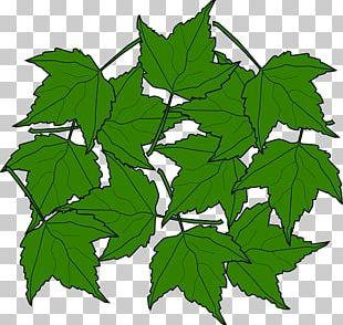Sugar Maple Maple Leaf Autumn Leaf Color PNG