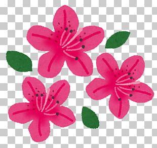 Rhododendron Indicum Nagushiyama Park Kawasaki Flower Azalea PNG