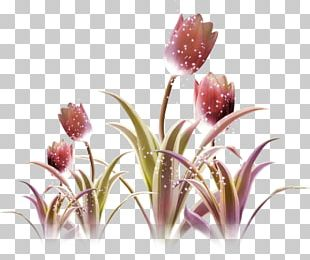 Tulip Purple Flower Violet PNG