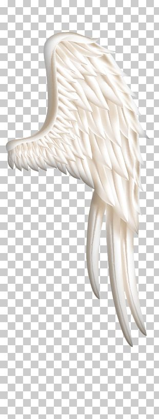 Bird Wing Icon PNG