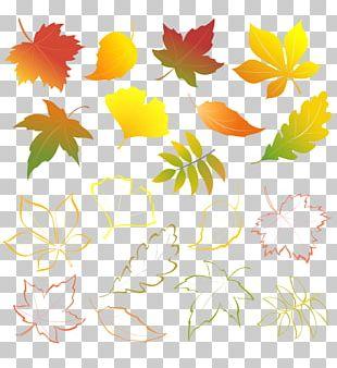 Autumn Leaves Autumn Leaf Color PNG