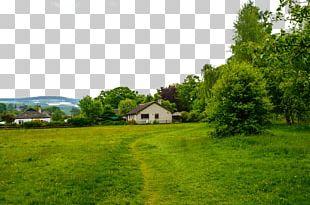 Lawn Grass Landscape Green PNG