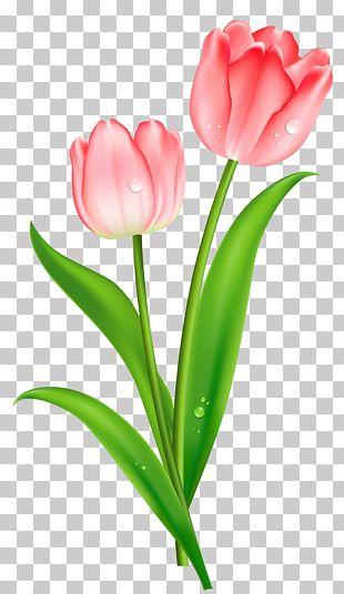 Indira Gandhi Memorial Tulip Garden Flower PNG