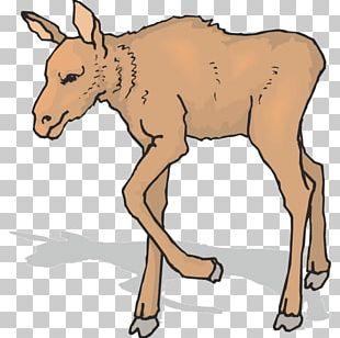 Mule Elk Moose Antler Reindeer PNG