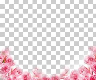 Pink Beach Rose Petal Flower PNG