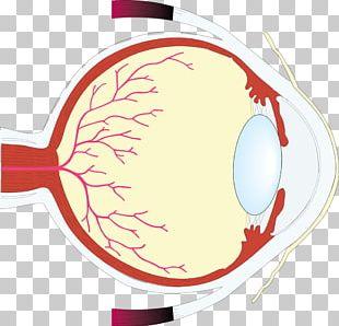 Human Eye Worksheet Retina Eye Care Professional PNG