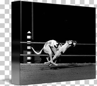 Greyhound Racing Stock Photography PNG