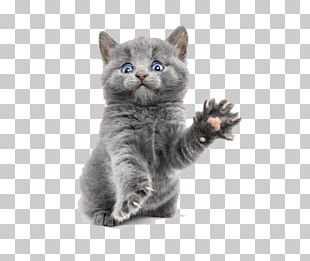 Scottish Fold Persian Cat Kitten Dog Hamster PNG