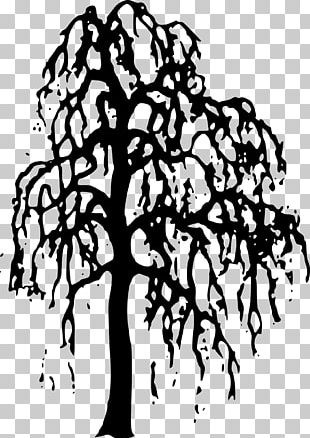 Willow Tree PNG