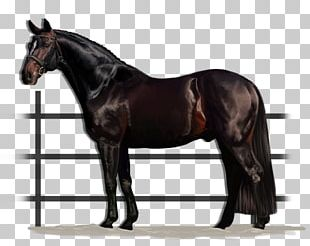 American Quarter Horse American Paint Horse Stallion Doc Bar Cutting PNG