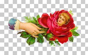 Victorian Era Flower Rose PNG