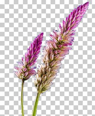 Purple Violet Google S PNG