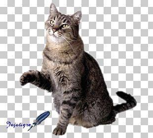 Dog Pet Sitting Cat Flashcard PNG