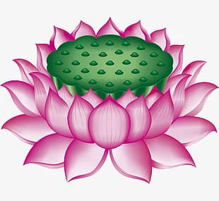 Lotus Throne PNG