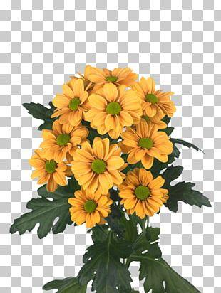Chrysanthemum Floral Design Cut Flowers Argyranthemum Frutescens Transvaal Daisy PNG