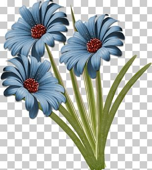Common Daisy Cut Flowers PNG