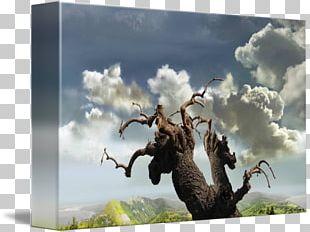 Stock Photography Desktop Author .ru PNG