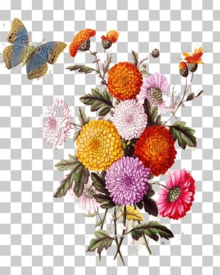 Flower Collage Stock Illustration Photography PNG